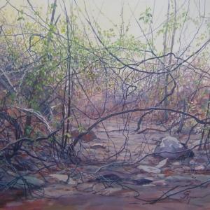 Вдоль высохшего ручья / Ao longo do riacho seco