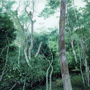 Лес в окрестностях Итамарати ди Минас / Mata nas cercanias de Itamarati di Minas