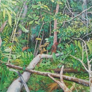 Сквозь лесные завалы