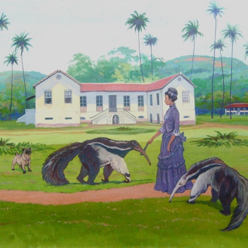 Дона Клара, любительница муравьедов / Dona Clara, amadora de Tamanduás
