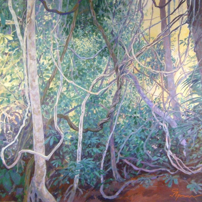 Лиановый лес / Floresta de cipós