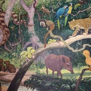 """илл. из книги В. Зотова """"На поиски животных"""" (Бразилия)"""