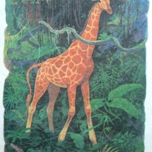 Жирафи и Окапи