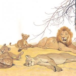 Илл. к книге о Семействе кошачьих (прайд)