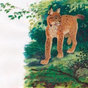 Илл. к книге о Семействе кошачьих (рысь)