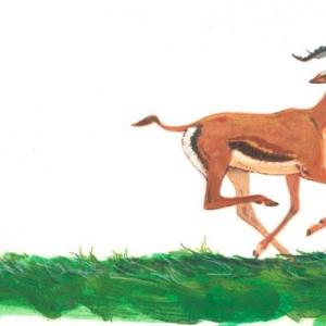 Илл. к книге о Семействе кошачьих (гепард)