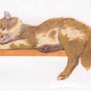 Илл. к книге о Семействе кошачьих (кот)