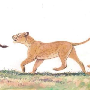 Илл. к книге о Семействе кошачьих (львица)